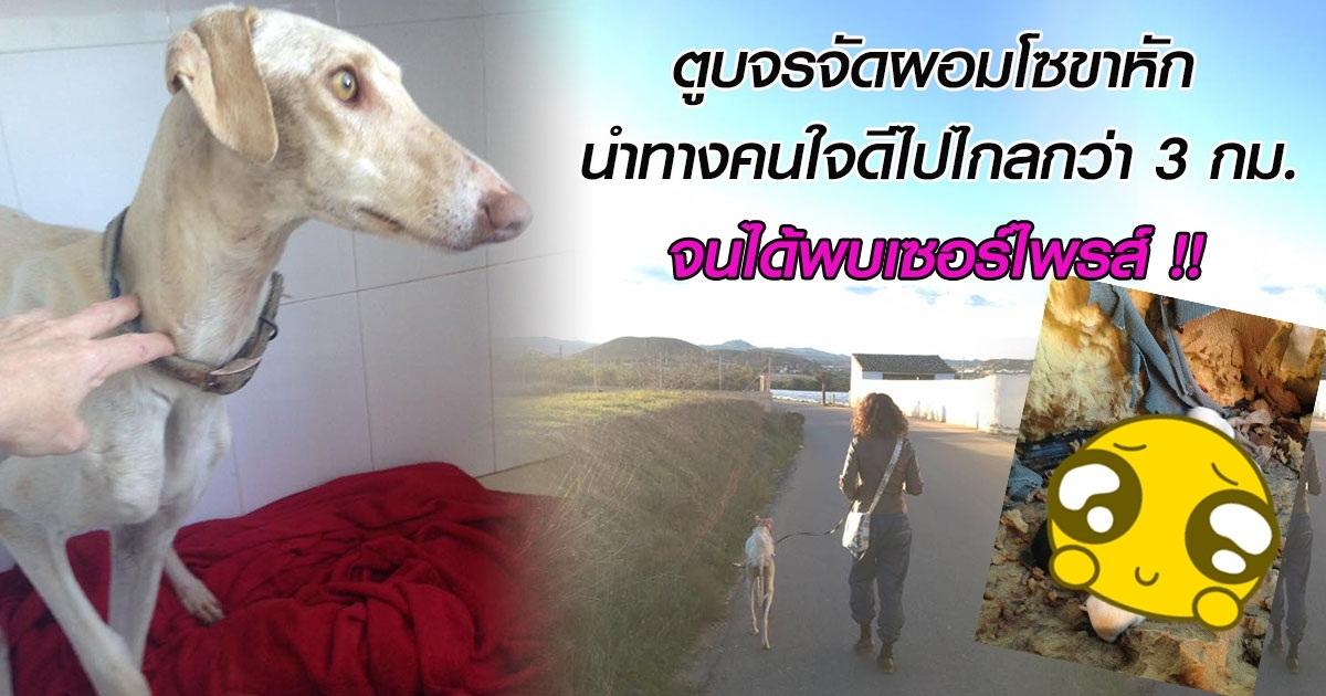 สุนัขจรจัดผอมโซขาหัก นำทางคนใจดีไปไกลกว่า 3 กม. จนได้พบเซอร์ไพรส์ที่แสนซึ้งใจ