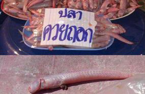 เชรดดด ! เจอชื่อปลา....นี้ไป แอบสตั้นท์ไป 3 วิ เลยทีเดียว